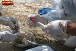 اختصاص یکصد میلیارد ریال برای کنترل و مقابله با بیماری آنفلوانزای فوق حاد پرندگان