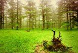 طرحی که نفس جنگل را بند میآورد