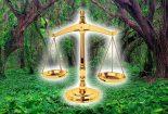 نقش رویه قضایی در توسعه حقوق محیط زیست